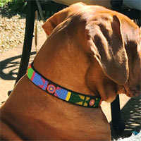 Masai Beaded Dog Collar - Pastel