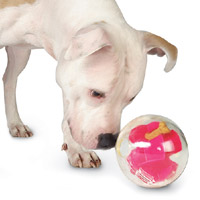 Orbee-Tuff Mazee dog puzzle treat ball