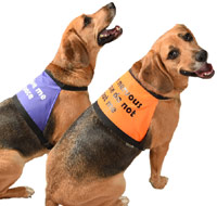 Warning Dog Message Vest