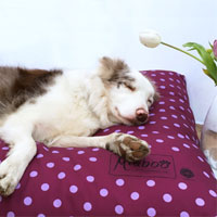 Miaboo Luxury Cushion Dog Bed - Spotty