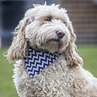 Dog Bandana Navy Chevron