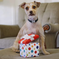 Party Time Gift Box Dog Toy