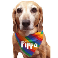 Personalised Rainbow Dog Bandana