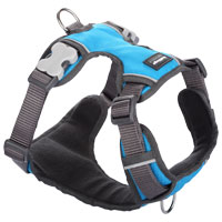Red Dingo Padded Dog Harness - Blue