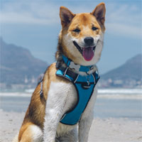 Red Dingo Padded Dog Harness