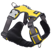 Red Dingo Padded Dog Harness - Yellow