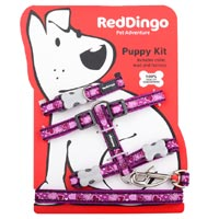 Puppy Harness, Collar & Lead Set - Breezy Love Purple