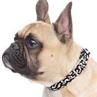 Gizmo Fabric Dog Collar