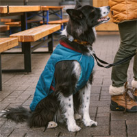 Ruffwear Stumptown Dog Coat
