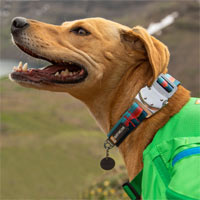 Ruffwear Top Rope Dog Collar