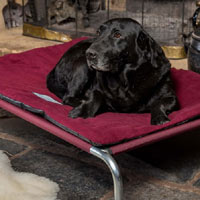 Premium Raised Dog Bed Bundle