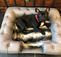 Balmoral Steel Grey Faux Leather Dog Sofa
