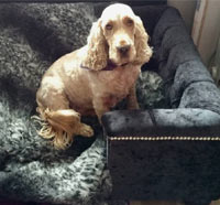 Sandringham Ebony Velvet Luxury Dog Bed