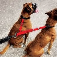 Zero Shock Coupler - Walk Two Dogs