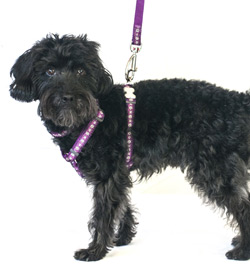 daisy chain purple dog harness
