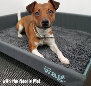 Raised dog bed with Noodle Mat