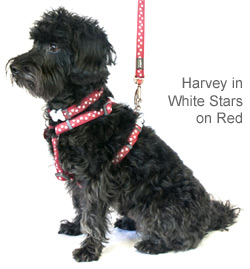 red dog harness with white stars