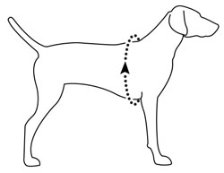 Ruffwear dog harness measuring guide