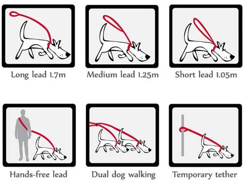 Red Dingo double ended training lead