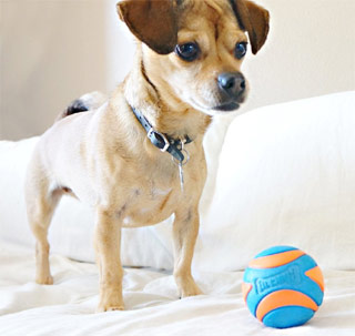 Chuckit squeaky dog ball