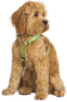 star green dog harness
