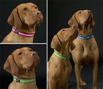 suedette luxury dog collars