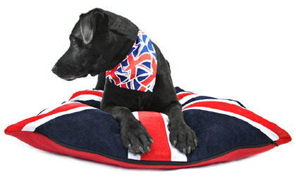 Union Jack pet products