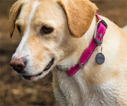 Headwater waterproof dog collar by Ruffwear