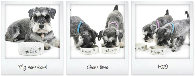 ceramic personalised dog bowls