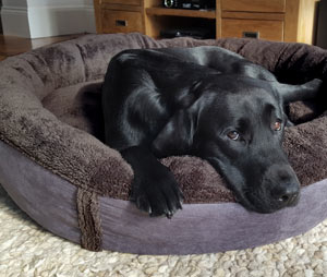 fleece bolster dog bed