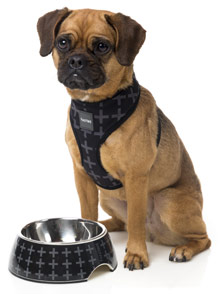 FuzzYard Yeezy Dog Bowl and Harness